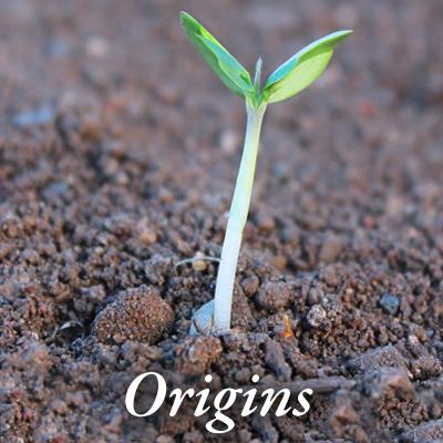 Origins_02